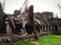 Angkor Nature stock image