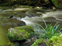 Nature tasmanienne Photo stock