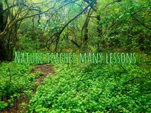 Nature teaches us many lessons, forest  photographed in Bloemfontein, South Africa