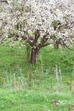 Bloomed apple trees. Nature in Tekeli. royalty free stock photo