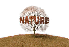 Nature text on a tree. Illustration of nature text on a tree Stock Images