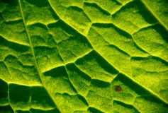 Nature texture Royalty Free Stock Photography