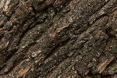 Nature Texture Background. Wooden Texture Background. Tree Bark Texture Background. Abstract Dark Colored Backdrop. Cracked Tree Texture. Nature Texture stock photos