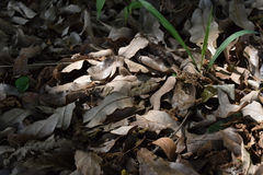 Nature texture of dry leaves pattern. Bunch of fallen dry oak leaves pattern Stock Photography