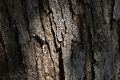 Nature texture of a tree trunk. Isolated tree trunk texture illuminated Stock Images