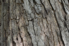 Nature texture of a tree trunk. Surface of a tree trunk closeup Stock Photography