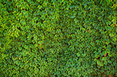 Nature textured backgrounds Royalty Free Stock Images