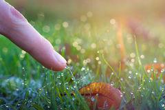 Nature Touch Stock Image