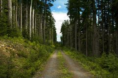 Nature Trail. Trail cutting through a wooded area Royalty Free Stock Photos