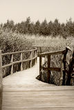 Nature trail. Peaceful, sunny, nature wooden walk trail Royalty Free Stock Photos