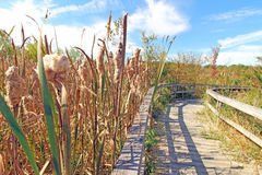 Nature trail in Autumn and cattails, upstate New York Stock Images