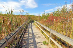 Nature trail in Autumn, upstate New York Stock Photo