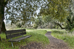 Nature trail with bench. Bench resting place along a scenic nature trail in northern california Stock Images