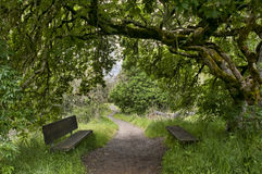 Nature trail with bench Royalty Free Stock Photography