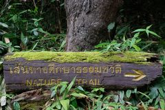 Nature trail at botanic garden in Thailand. Nature trail instruction way on beautiful timber at botanic garden in Thailand stock photography