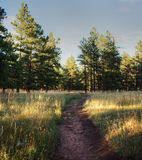 Nature Trail in Boulder, Colorado Royalty Free Stock Photography