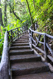 Nature trail in Costa Rica Stock Images