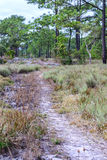Nature trail for cycling and walking in Phu Kradueng national park, Loei Thailand Stock Photography