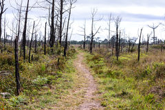Nature trail for cycling and walking in Phu Kradueng national park, Loei Thailand Stock Photo