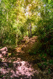 Nature trail for cycling and walking in Phu Kradueng national park, Loei Thailand Royalty Free Stock Photo