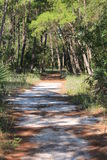 Nature Trail in Florida Royalty Free Stock Photo