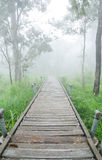 Nature trail with the fog. Nature trail within the nation park are filled with early morning fog Royalty Free Stock Photo