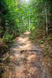 Nature Trail In The Forest Royalty Free Stock Image