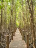 Nature trail in Mangrove national park, Gulf of Thailand Stock Photography
