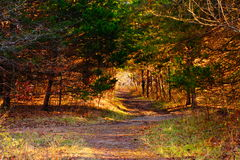 Nature trail in missouri Royalty Free Stock Photo