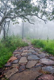 Nature trail with fog Royalty Free Stock Photography