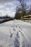 Nature Trail in Ohio. During Winter with Footsteps stock photography