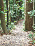 Nature Trail. One of many nature trails found in Bukit Timah Hill, Singapore Stock Photography