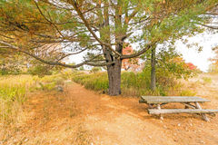 Nature trail and picnic bench Royalty Free Stock Images