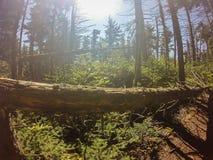 Nature trail scenes to calloway peak north carolina Stock Photo