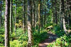 Nature trail scenes to calloway peak north  carolina Stock Images