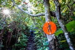 Nature trail scenes to calloway peak north carolina Royalty Free Stock Image