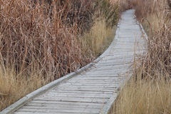 Nature trail in wetland. Winding nature trail - wooden boardwalk path through wetlands, fall scenery Stock Photography