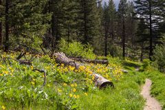 Nature trail wildflowers Royalty Free Stock Photography