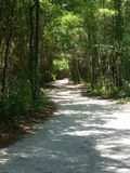 Nature trail wooded path winding road. Nature trail canopy oak trees Stock Photography