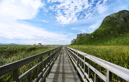 The Nature Trail Wooden Bridge. Royalty Free Stock Photo