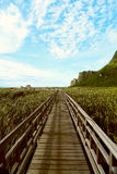 The Nature Trail Wooden Bridge. Royalty Free Stock Images