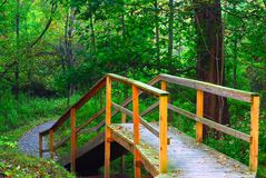 Nature Trail. A nature trail wooden walkway leading into the woods Royalty Free Stock Images