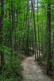 Nature Trails in Hanging Rock National Park, NC Stock Photo