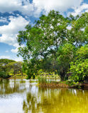 Tranquil pond in summer park Royalty Free Stock Images