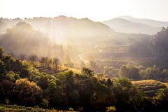 Nature travel concept: Misty summer for layer of tree mountain. Nature travel concept: Misty summer for layer of tree and mountain hills with mist landscape with stock image