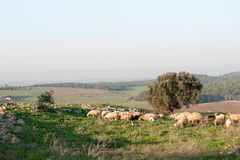 Nature travel in Israel Stock Images