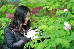 Nature travel photographer woman with Sunshine in spring, looking at carmer screen. Asian chinese Woman Nature travel photographer woman taking pictures in Royalty Free Stock Photography
