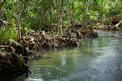 Nature travel in thailand. River run  and much tree in thailand Stock Photography