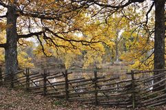 Nature, Tree, Autumn, Woodland stock photos