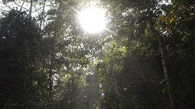Nature forest with sunlight. Nature tree in forest with sunlight stock video footage
